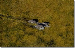 foto priroda mir iskusstvo  Фотопост: «Земля, увиденная с неба», Ян Артюс Бертран