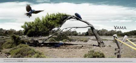 priroda  Фотопост: социальная реклама защиты животных