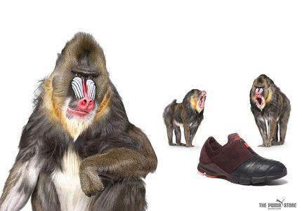grafika i dizayn  Животные в рекламе Puma