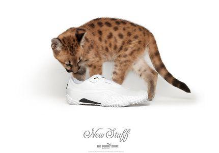 Обувь Пума 10