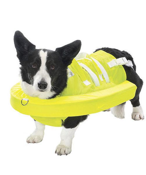 Собачий плавать безопасном