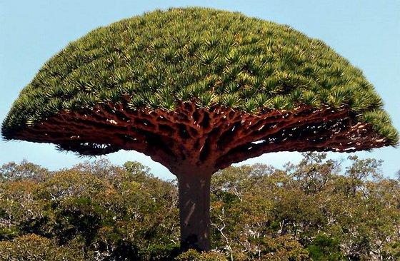 Острова Сокотра. Неужели это наша планета Земля?
