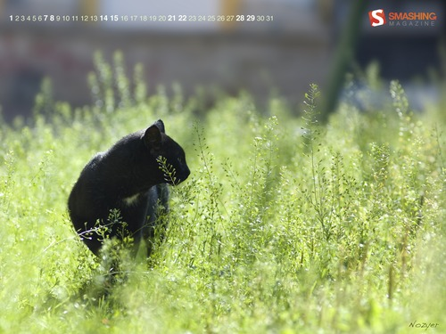 Summer-cat in  Desktop Wallpaper Calendar: August 2010