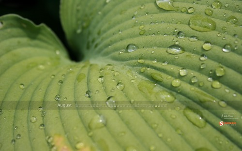 Leaves-in-the-rain in  Desktop Wallpaper Calendar: August 2010