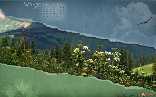 Colorado-wildflowers in Desktop Wallpaper Calendar: September 2010