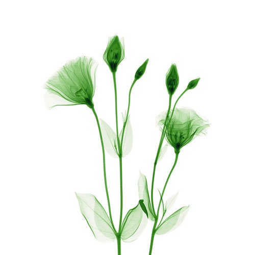 удивительные рентген цветы хью терви