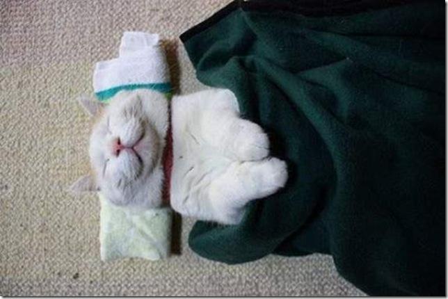 foto  Фотопост: самый ленивый кот в мире