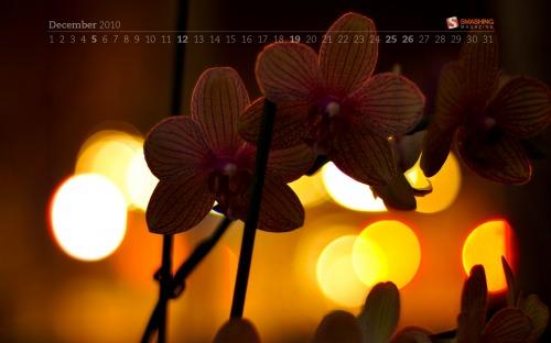 Flower Bokeh 57 in Desktop Wallpaper Calendar: December 2010