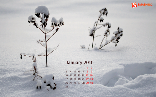 In The Snow 86 in Desktop Wallpaper Calendar: January 2011