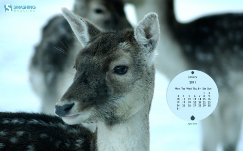 Wonderful Winter 61 in Desktop Wallpaper Calendar: January 2011