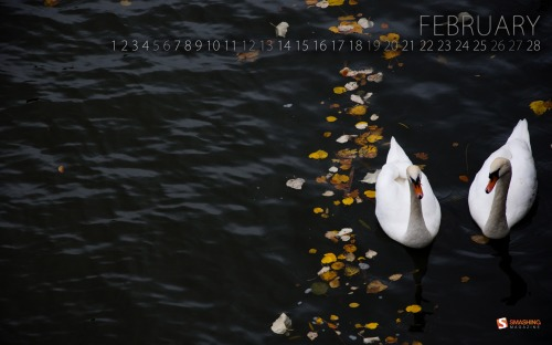 Swan Love 25 in Desktop Wallpaper Calendar: February 2011