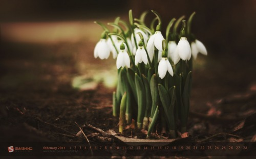 Bunch Of Snowdrops 88 in Desktop Wallpaper Calendar: February 2011