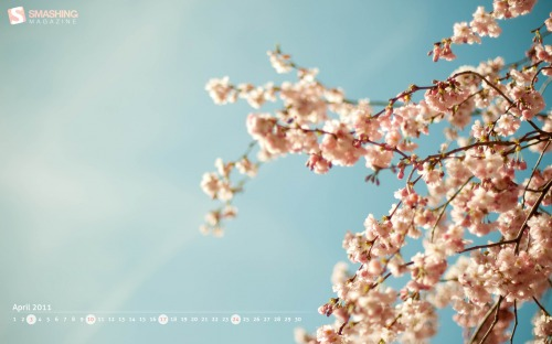 Prunus 48 in Desktop Wallpaper Calendar: April 2011