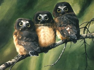 priroda interesnyie faktyi  Важные птицы
