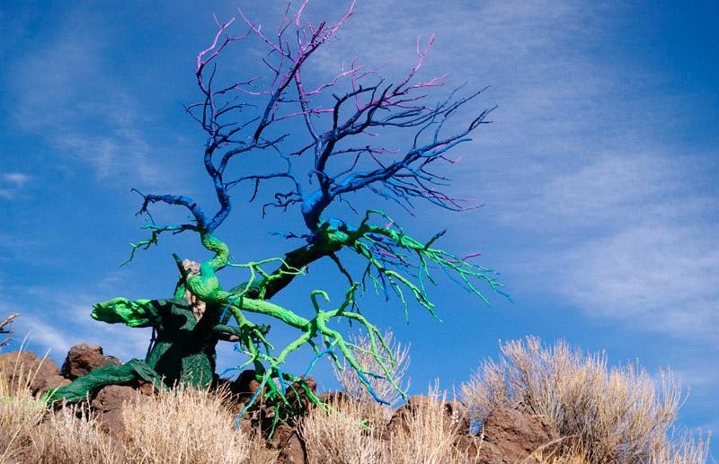 iskusstvo  Вторая жизнь деревьев