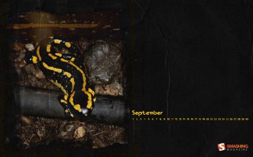 Salamander 49 in Desktop Wallpaper Calendar: September 2011