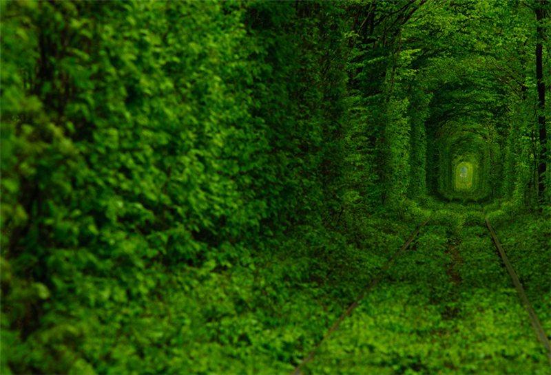 priroda mir  Сказочный тоннель