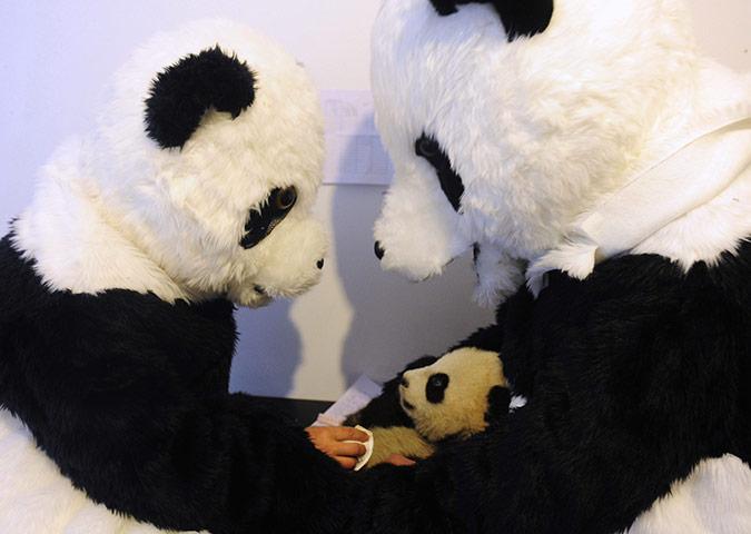 interesnyie faktyi  Люди панды