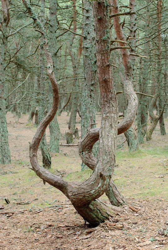 mir  Танцующий лес