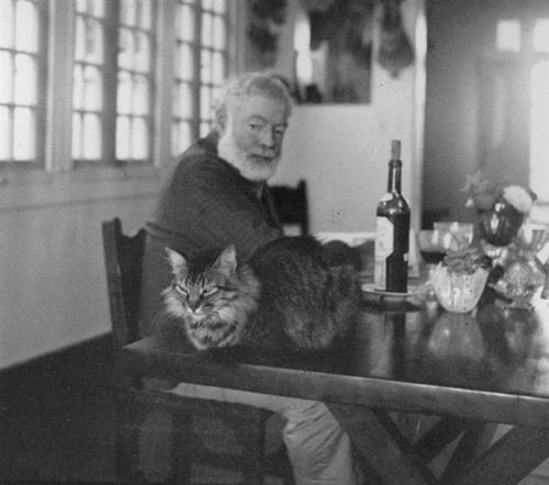 interesnyie faktyi  Коты Хемингуэя – национальное достояние