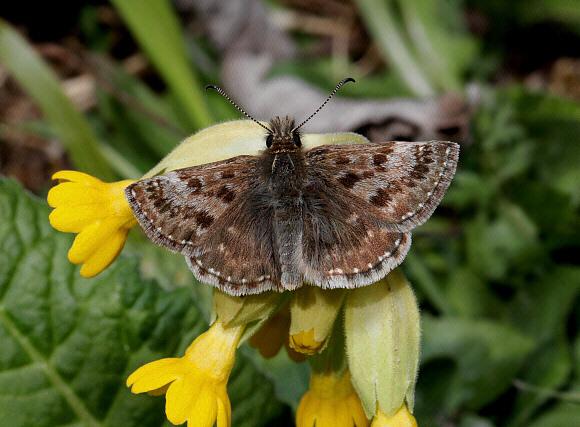 priroda  Какие бабочки могут 14 лет превращаться из гусеницы в бабочку