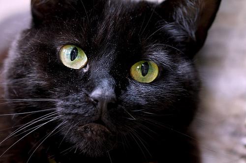 zhivotnye  Зачем кошке усы?