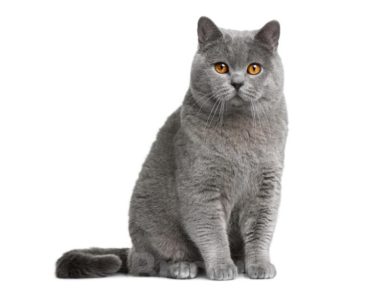 interesnyie faktyi zhivotnye  Интересные факты о кошках