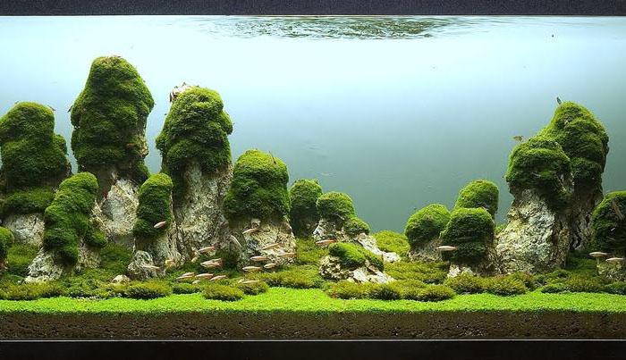 xobbi priroda interesnyie faktyi zhivotnye grafika i dizayn  От такого подводного ландшафта дух захватывает!
