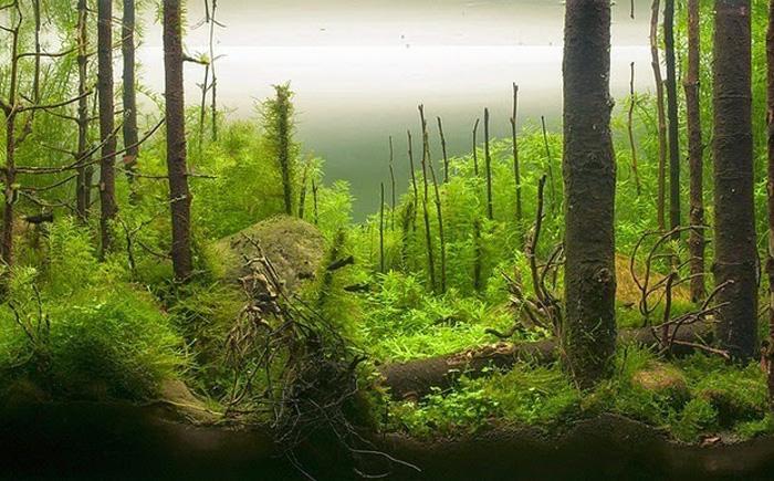 «Утро в лесу»