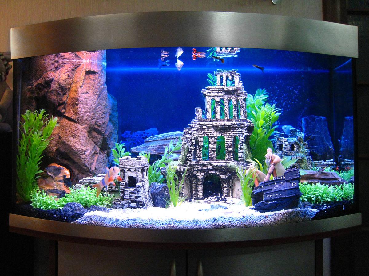 Картинки по запросу аквариумы